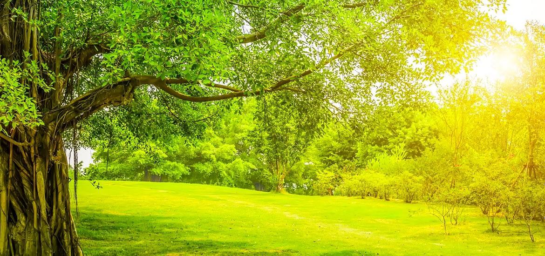 Mic si ecologist – proiect de responsabilitate sociala